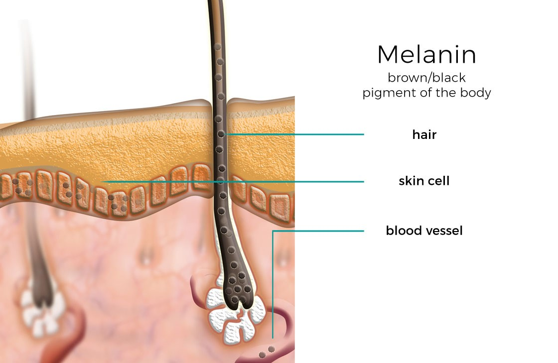 how-melanin-works-graphic